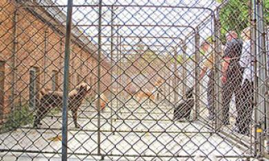 Each dog has its own fenced in pen, giving interested parties a look at each animal. (EC)