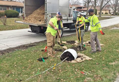 The tree-planting crew in Flossmoor placed 55 trees during Community Cleanup Day. (Provided photo by Jennifer O'Keefe)